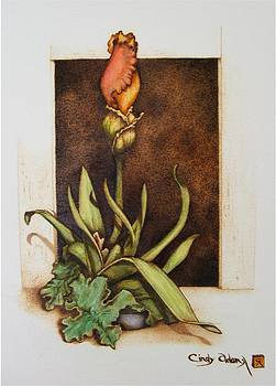Budding Iris by Cynthia Adams
