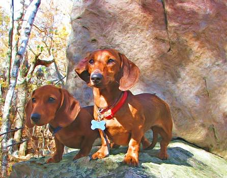 Buddy and Peaches on Top of Rib Mountain by Victoria Sheldon