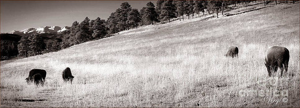 Buffalo Overlook by Virginia Furness