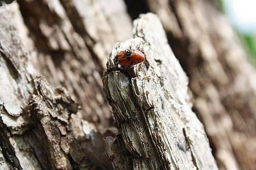 Bug Lovin' by Alexa  Brtna
