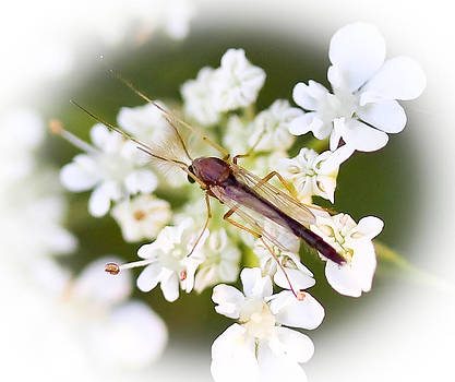 Bug on White by Maureen  McDonald