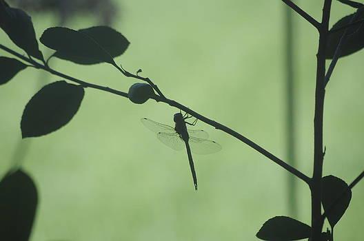 Earl Bowser - Bugs 03