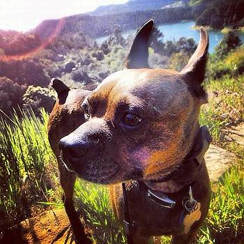 Bugsy At Lake Hollywood by Richard Reens