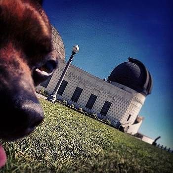 Bugsy Observing At The Observatory by Richard Reens