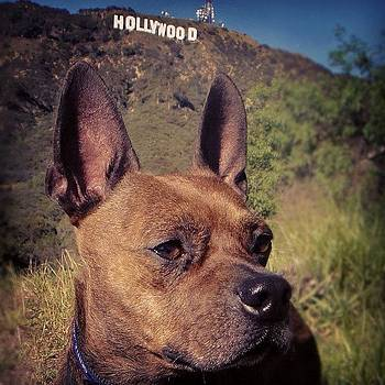 Bugsy Of Hollywood by Richard Reens