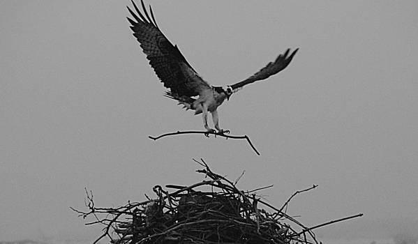 Building the Nest by Bob Lennox