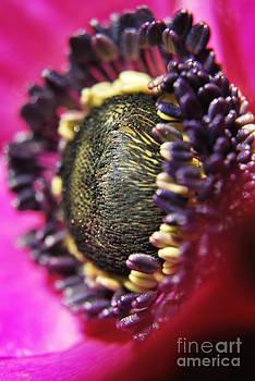 Yhun Suarez - Bulb Flower
