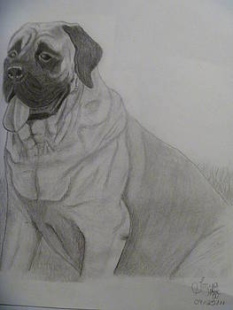 Bull Mastiff by Tonya Hoffe