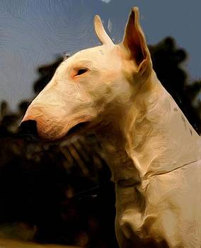 Bull Terrier by Leeann Stumpf