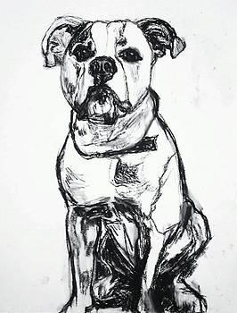 Andrew Hench - Bulldog