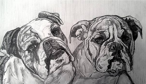 Andrew Hench - Bulldogs