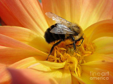 Bumble Bee by Corrie McDermott