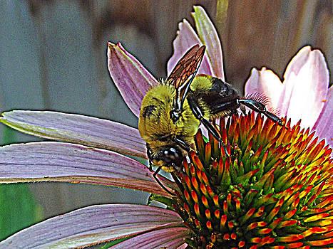 Bumblebee 2 by Robin Hewitt