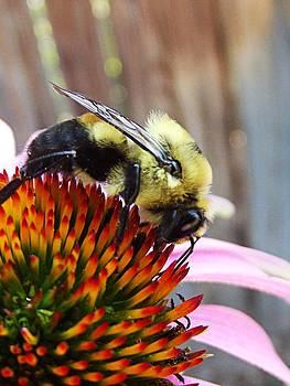 Bumblebee by Robin Hewitt