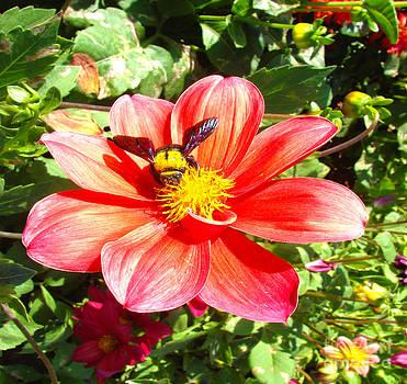 Roy Foos - Bumblebee