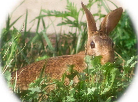 Bunny Playing Hide and Seek by Maureen  McDonald