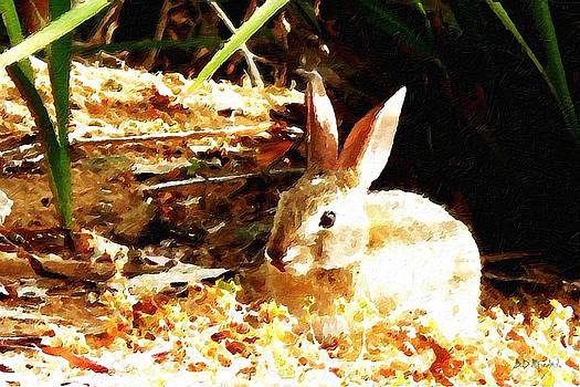 Bunny Rabbit by Brian D Meredith