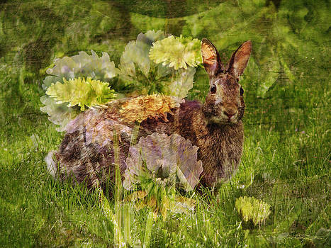 Bunny Vision by Karen Casey-Smith