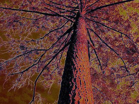 Burgundy Tree by Tracy Daniels