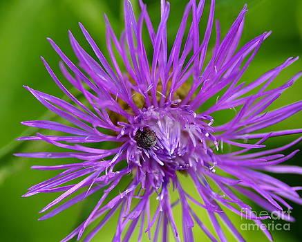 Buried In Purple by Scott Gould