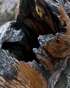 Jason Turuc - Burnt and Battered