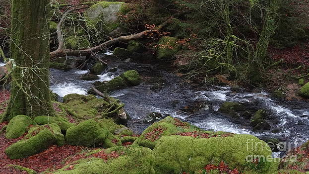 Burrator Moss by Richard Heath