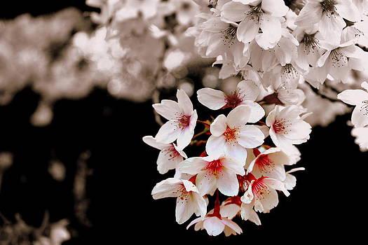 Burst of Spring by Sonja Bonitto