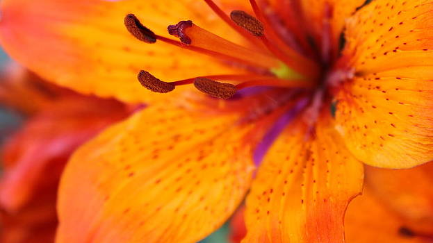 Bursting with Colour by Sonja Bonitto