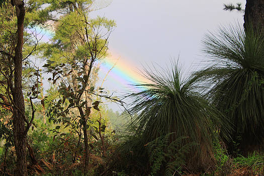 Bushwalk Rainbow  by Douglas Clulow