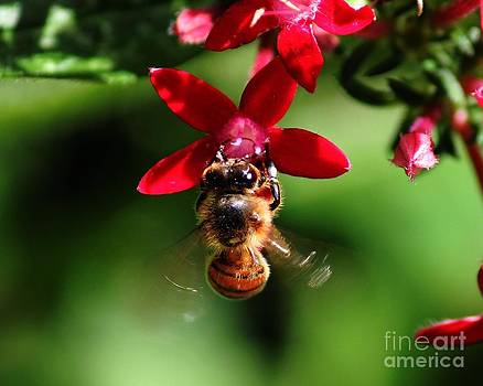 Busy as a Bee by Theresa Willingham