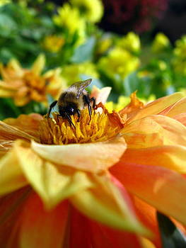 Busy Bee by Jessica Modicamore