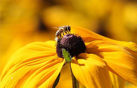Karen Scovill - Busy Bee