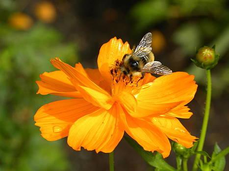 Peggy  McDonald - Busy Bee