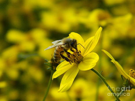 Busy Bee by Sara  Mayer