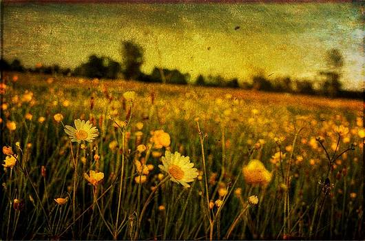 Buttercup Meadow by Tim Kahane