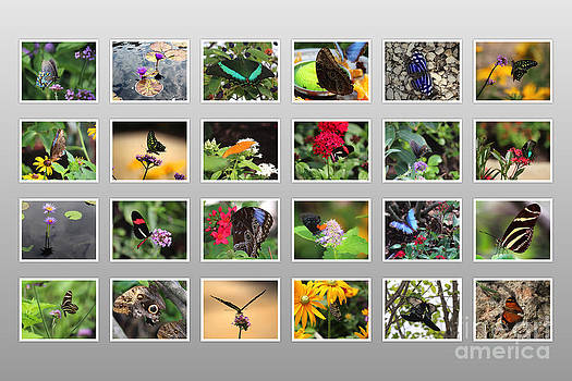 Butterflies and Gardens Poster 30x20 by C Todd Creations