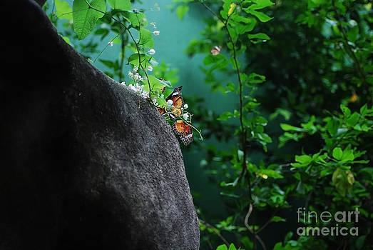 Butterflies beside a rock by Saajid Abuluaih