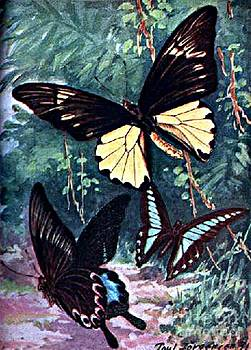 Butterflies from by Brehm