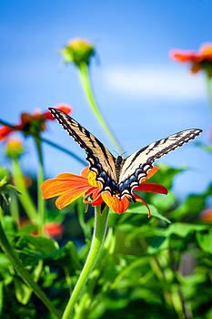 Butterfly -1 by Alhaji Samura