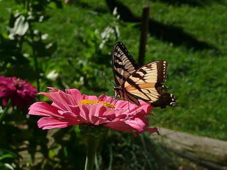 Angela Hansen - butterfly and flower
