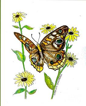 Butterfly and Yellow Dasies by Norma Boeckler