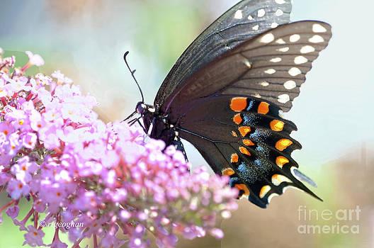 Regina Geoghan - Butterfly Beauty-Black Swallowtail