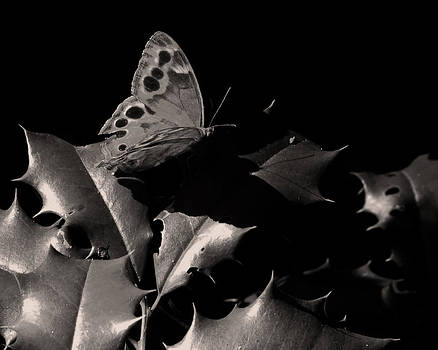 Butterfly by Brian M Lumley