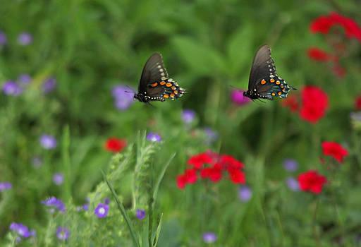 Susan Rovira - Butterfly Chase