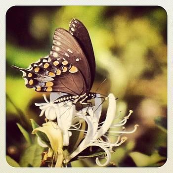 #butterfly #chesapeakebay #maryland by Robyn Montella