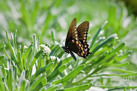 Christine Kapler - Butterfly
