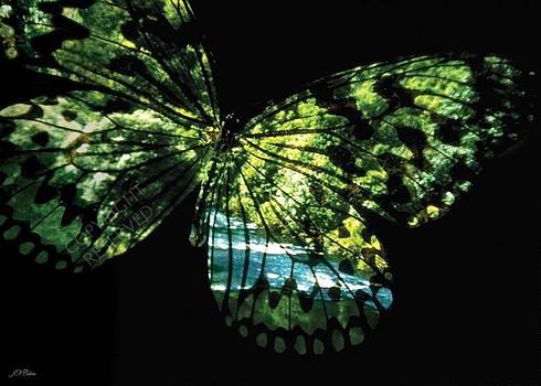 John Neville Cohen - Butterfly Country