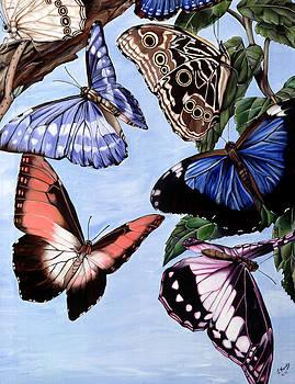 Butterfly Craz by Leeann Stumpf