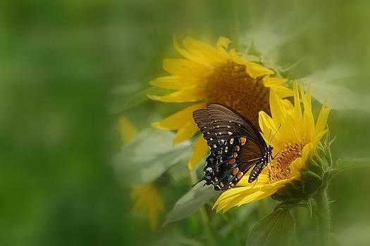 Butterfly Dream by David Gunter
