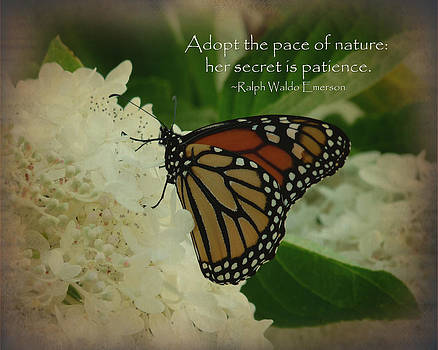 Terry Eve Tanner - Butterfly Dreams Inspirational